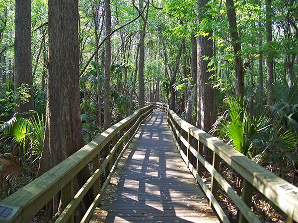 Highlands Hammock State Park near Sebring in Highlands County, Florida